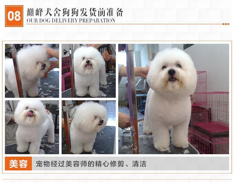 贵阳实体店热卖斑点狗颜色齐全微信选狗直接视频12