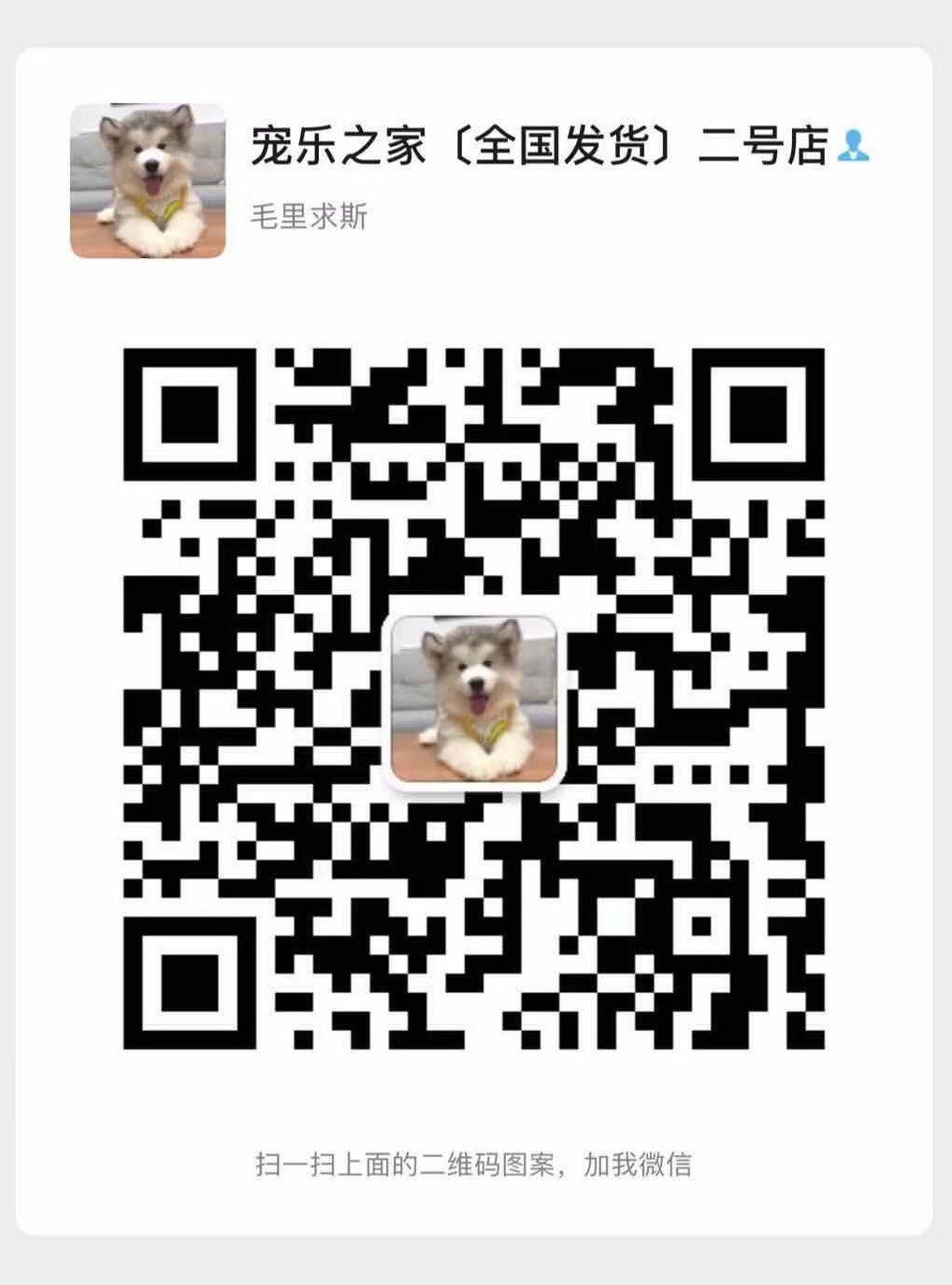 多只优秀品质武汉雪纳瑞出售 支持上门看狗也可视频14