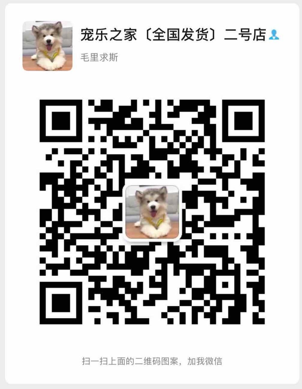 多只优秀品质武汉雪纳瑞出售 支持上门看狗也可视频5
