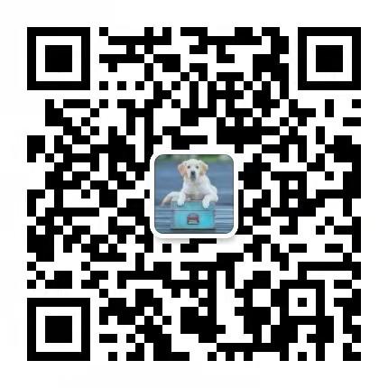 高品质的郑州中亚牧羊犬找爸爸妈妈包养活送用品5