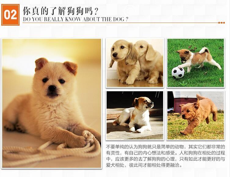 极品罗威纳等各种名犬欢迎上门选购7