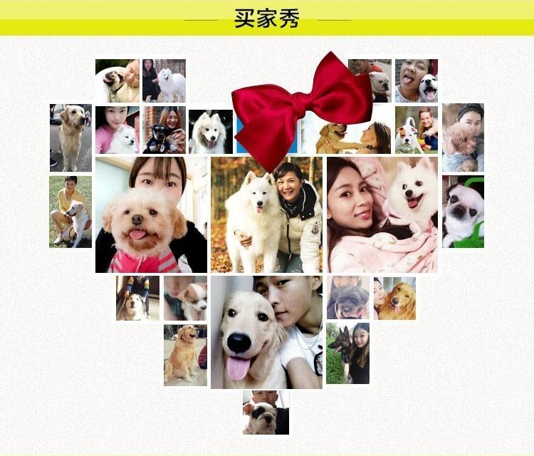 南京出售纯种罗威纳幼犬可上门挑选6