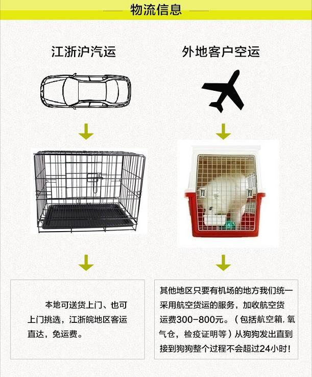 南京出售纯种罗威纳幼犬可上门挑选13
