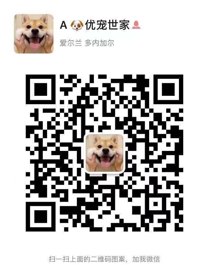 南京出售纯种罗威纳幼犬可上门挑选5