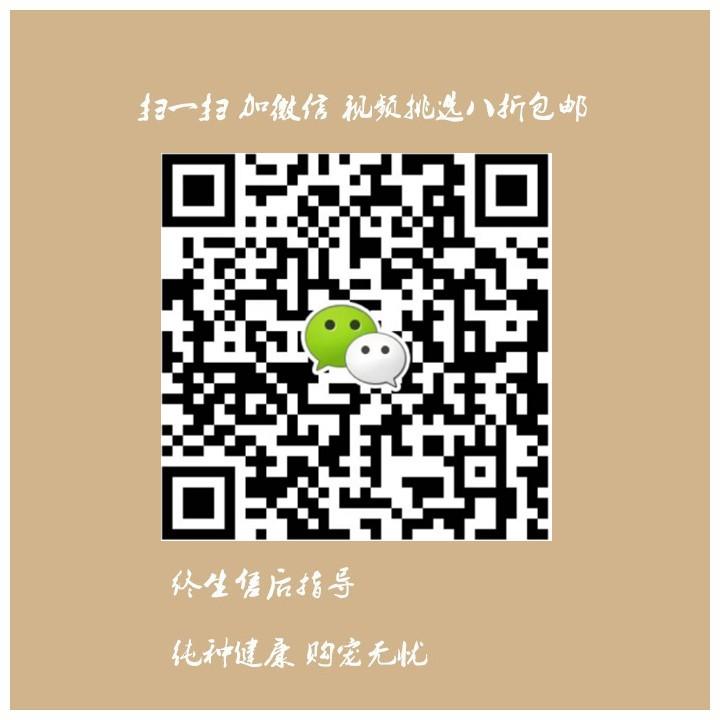杭州哪里有卖纯种的杜宾犬 杭州哪里出售健康的杜宾犬5