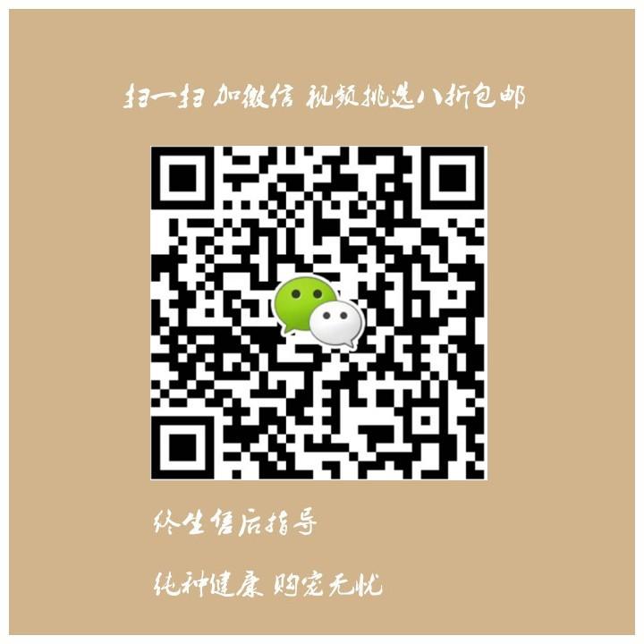 杭州哪里有卖纯种的杜宾犬 杭州哪里出售健康的杜宾犬11