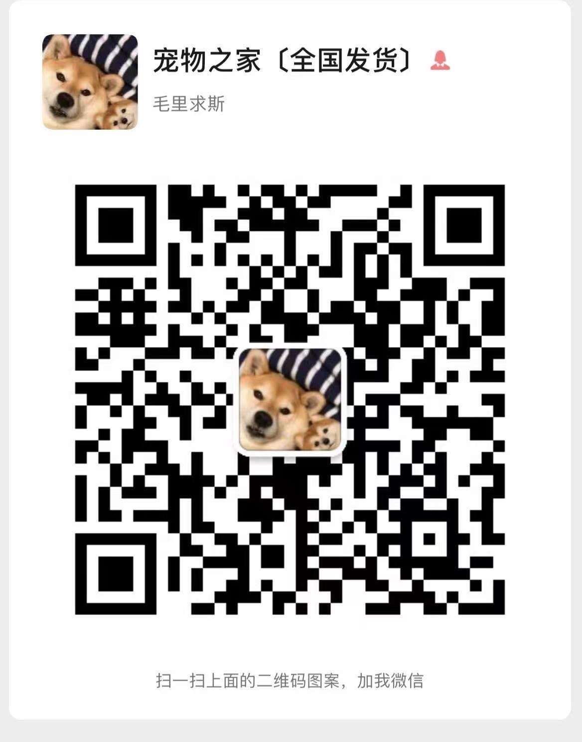 杭州出售纯种血统正宗精品英国斗牛犬聪明英牛活泼忠诚5