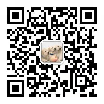 直销出售纯种德国牧羊犬 福州当地可上门挑选可签协议5
