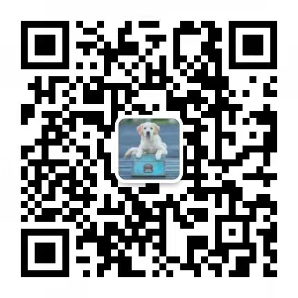 犬舍直销血统纯正马尔济斯CKU认证犬业5