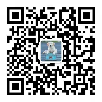 犬舍直销血统纯正马尔济斯CKU认证犬业12