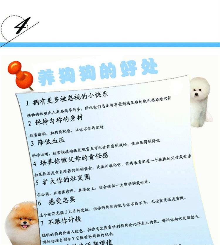 犬舍直销血统纯正马尔济斯CKU认证犬业7