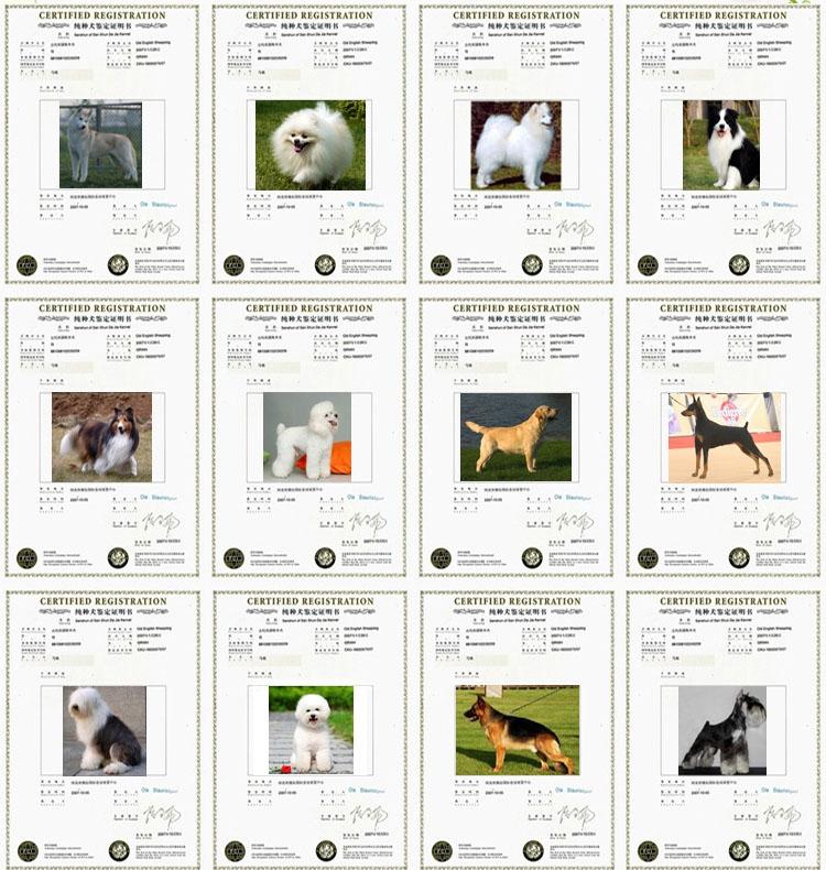 白沙县专业繁育边境牧羊犬出售欢迎上门挑选赛级边牧