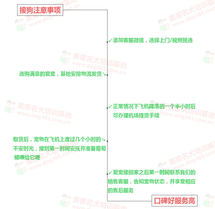 CKU犬舍认证出售高品质重庆松狮保障品质一流专业售后