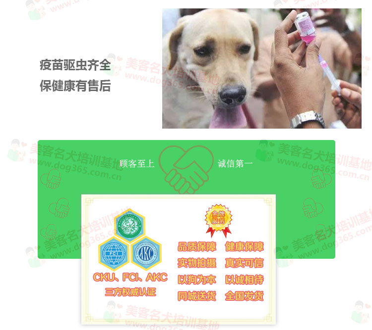 不卖病狗不卖串杭州售泰迪犬健康保终身泰迪幼犬多只选