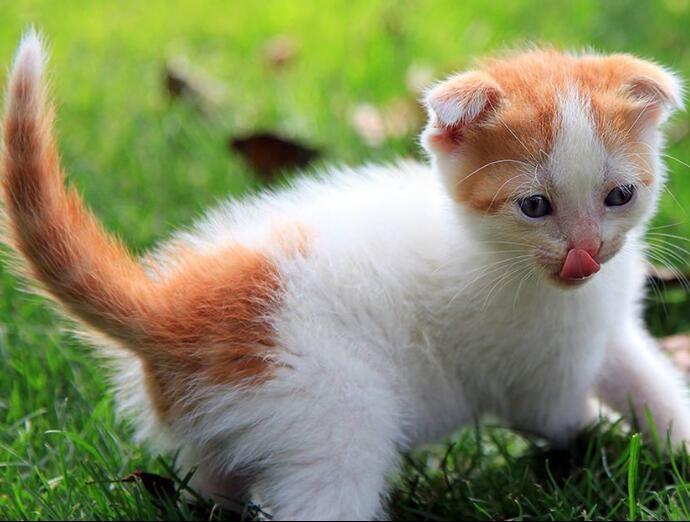 中华田园猫终身质保终身护养指导