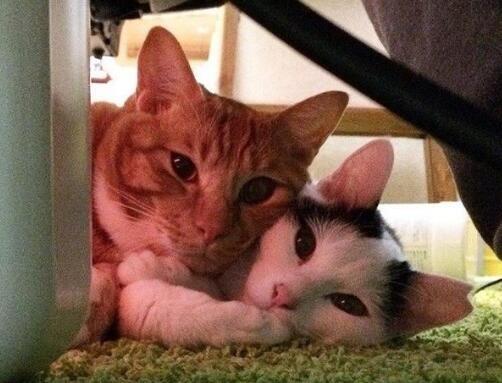 田园猫生宝宝了,希望能给它们找一个新家