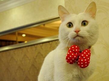 中华田园猫优质售后服务