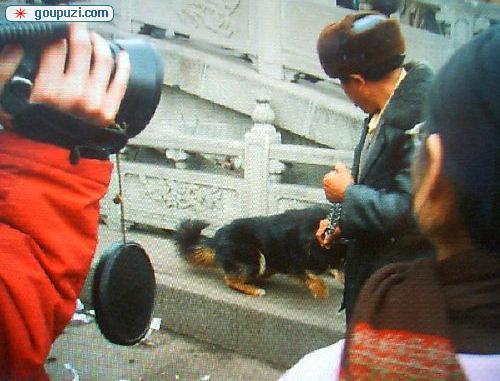 中国猛犬藏獒PK美国比特犬打架 谁是犬王(图)5