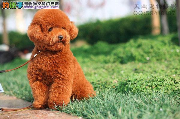 出售各色泰迪熊宝宝啡色的玩具宝宝特价出售
