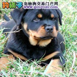宁波哪里有卖罗威纳犬,罗威纳犬多少钱一只。