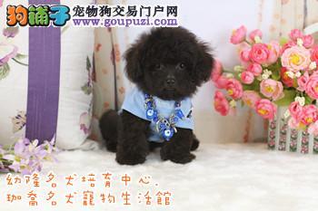 台灣台南珈喬寵物生活館