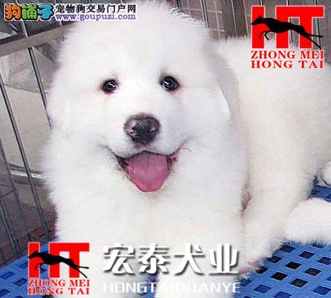 大白熊 大白熊多少钱 大白熊价格 大白熊图片