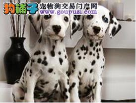济南精品高品质斑点狗宝宝热销中签订保障协议