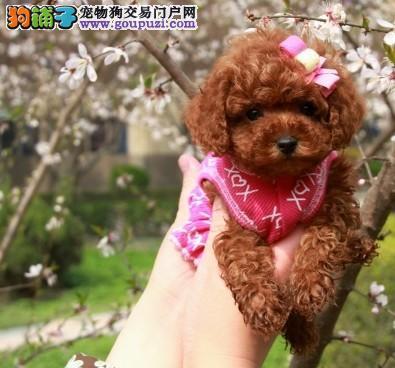 超可爱韩版玩具泰迪宝宝低价热销-保半个月健康