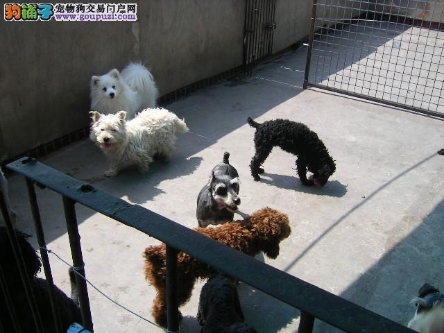 江苏哪有好的狗场出售狗狗?欢迎爱狗的朋友来我狗场