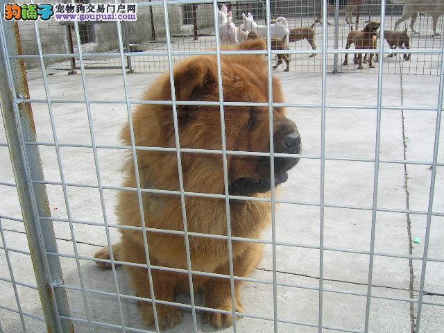 苏州哪有正规的狗场?欢迎爱狗的朋友来我狗场挑选爱犬