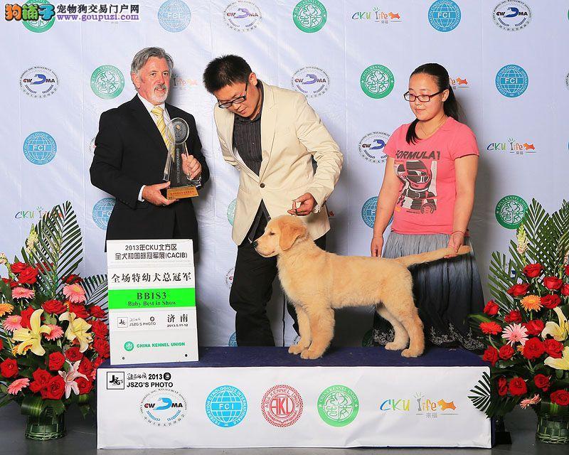 济南/柠檬犬舍韩国登陆Style和梦芭莎直子最高奖励BIS[一个月公狗]