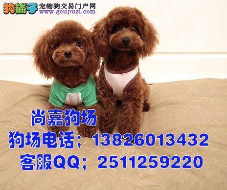 惠州哪里有卖茶杯泰迪熊,惠州市的泰迪熊一只多少钱