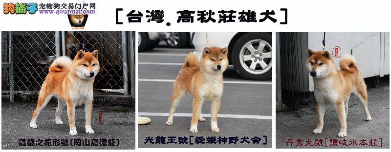 台湾.高秋庄. 柴犬专业犬舍