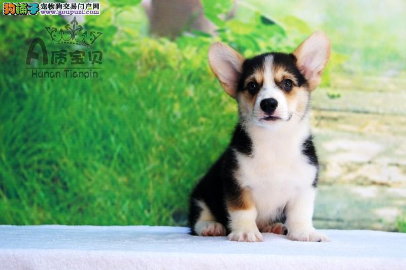 这里是天下爱狗人士的绿色之选,品质优良,诚信为先。