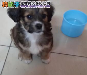 新买的小狗种种原因不能养,100元卖掉