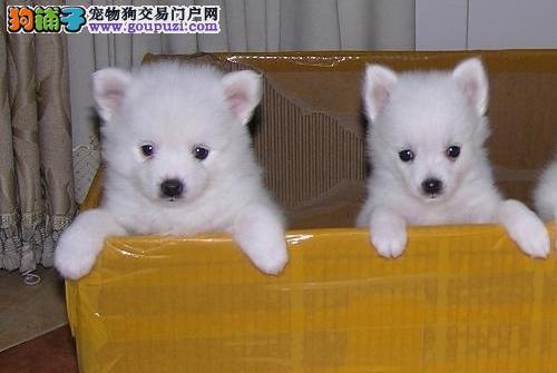 出售繁殖超可爱漂亮的银狐宝宝/欢迎选购