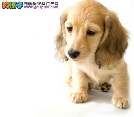 我是爱狗人士丶我为{精品可卡幼犬}代言丶服务不卑不亢