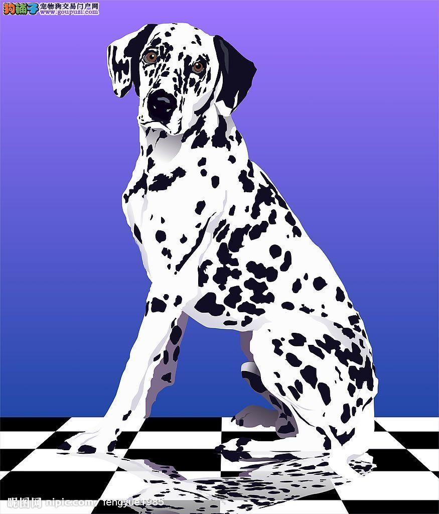 出售正宗血统优秀的长沙斑点狗签订三包合同