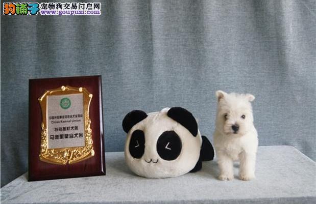 郑州实体店出售精品西高地保健康保终身送用品
