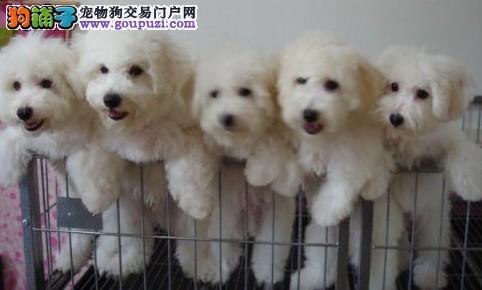 云南什么地方有狗场/云南哪里有卖宠物狗的