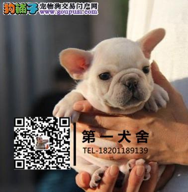 大型养殖场直销英牛 法牛幼犬 北京最专业的斗牛犬舍[