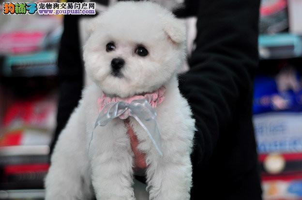 微信提供真实狗狗视频!良心卖狗!诚信待人