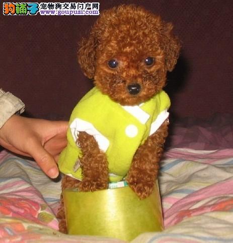 佛山哪里有卖西施犬 西施犬好养吗