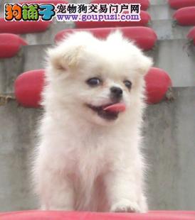 品质健康有保障北京京巴热卖中微信看狗真实照片包纯