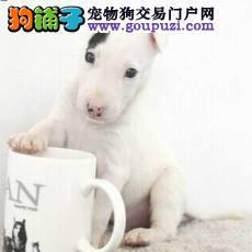 北京热销牛头梗颜色齐全可见父母质保三年支持送货上门