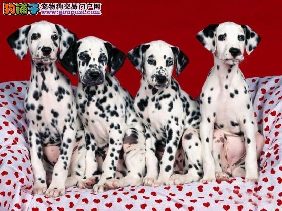 墨点狗狗,斑点幼崽,斑点您的最爱!!!!