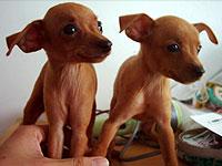 武汉出售小鹿犬公母都有品质一流可刷卡可视频