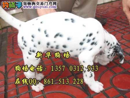 东莞在什么地方有狗场呢 东莞去哪里有斑点小狗买