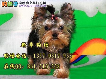 东莞有卖约克夏的地方在哪 新华狗场保障出售
