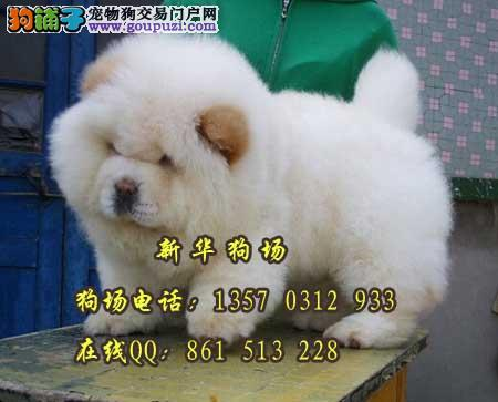 东莞哪里有中型犬松狮买 奶白色松狮多少钱一只